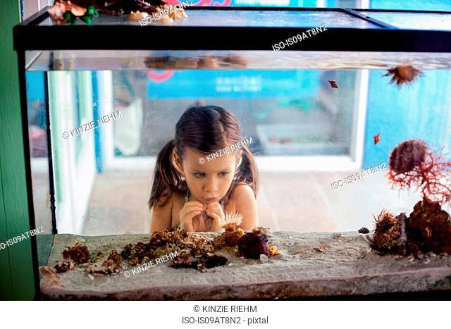 Girl looking into salt water aquarium