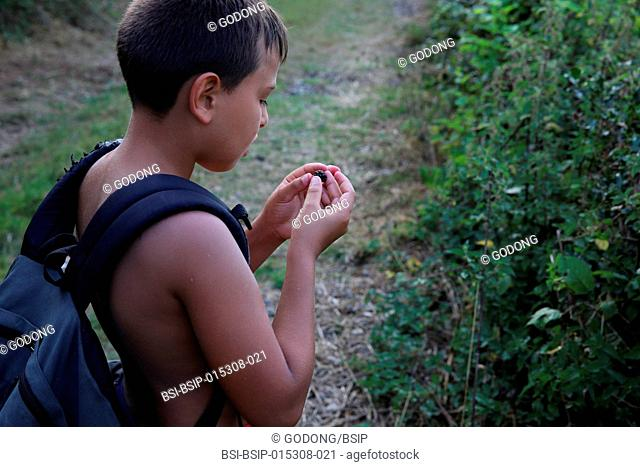 Boy picking blackberries