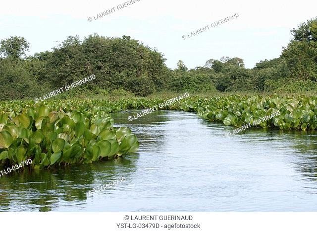 Nature, River, Pantanal, Mato Grosso do Sul, Brazil