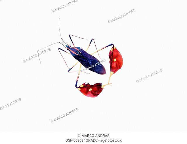 a different insect animal beetle bug