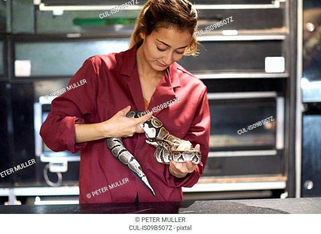 Female college student handling ball python in lab
