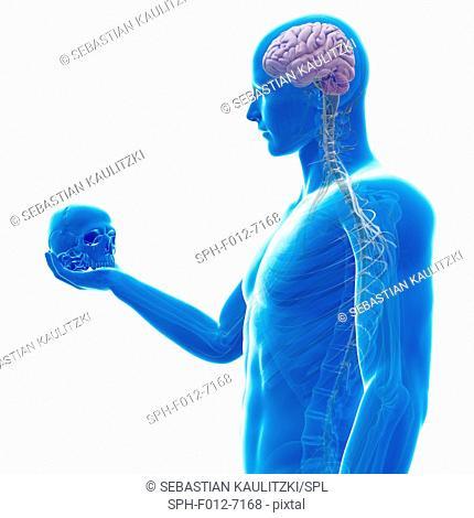 Person holding a skull, Illustration