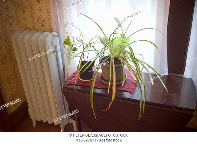 Houseplants setting on a table next to a radiator and window