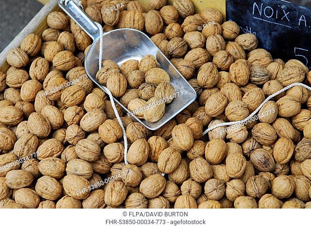 Common Walnut Juglans regia nuts for sale on market stall, Dordogne, France