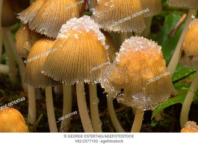 Mushroom along Brice Creek Trail, Umpqua National Forest, Oregon