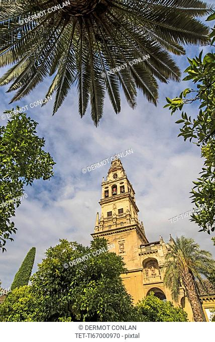 Spain, Andalusia, Cordoba, Minaret of Great Mosque of Córdoba behind trees
