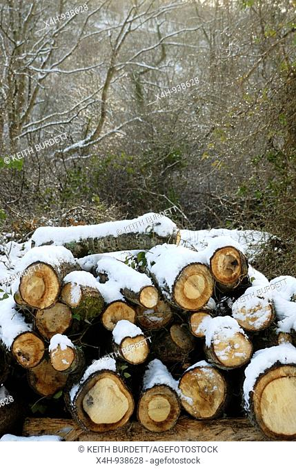 A pile of Oak logs, stacked for firewood in snow, Wales