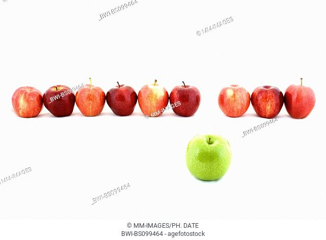 apple (Malus domestica), a line of red apples and one green apple