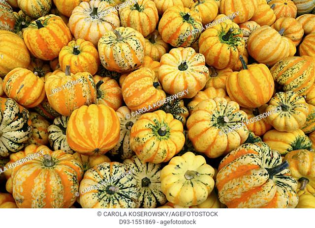 colourful pumpkins after harvest
