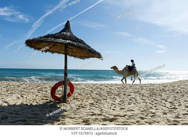 North Africa, Tunisia, Cape Bon, Hammamet. Camel for tourists walking on the beach