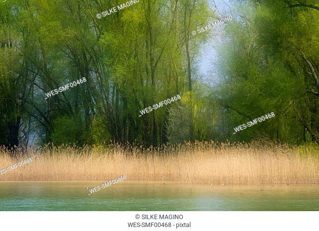 Germany, Baden W¸rttemberg, Mainau Island, Lake Constance