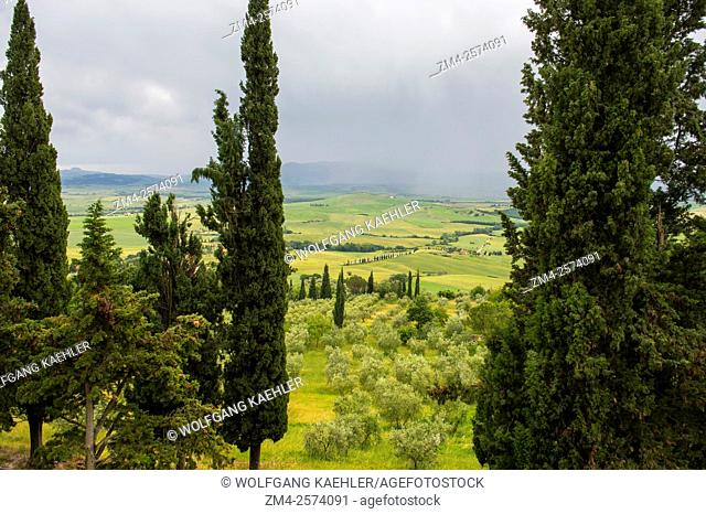 View of the Val d'Orcia near Pienza with Italian cypress trees (Cupressus sempervirens) and olive trees, Tuscany, Italy
