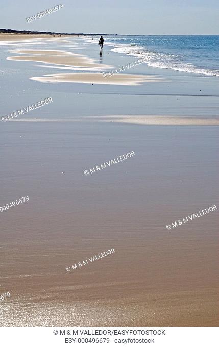 Beach, Doñana National Park  Huelva province, Andalucia, Spain