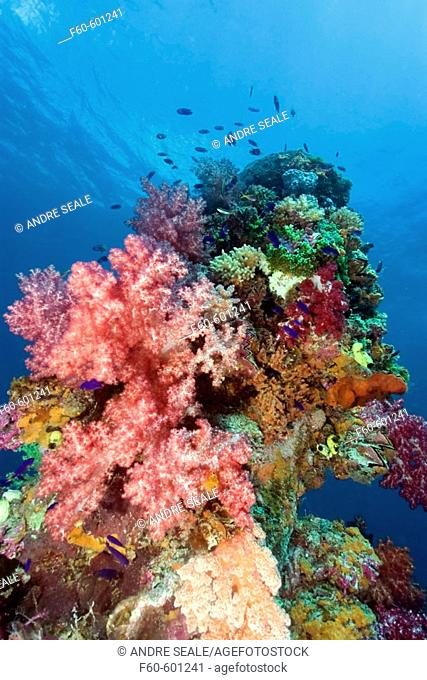 Mast encrusted with soft coral, Dendronephthya sp.,Shinkoku Maru, Truk lagoon, Chuuk, Federated States of Micronesia, Pacific