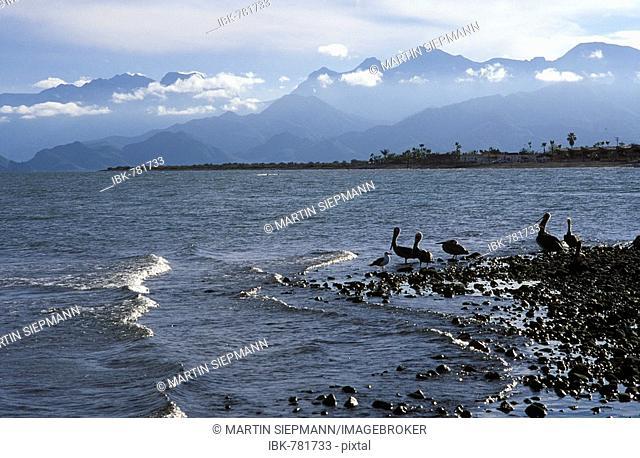 Loreto, coast with pelicans, Baja California Sur, Mexico