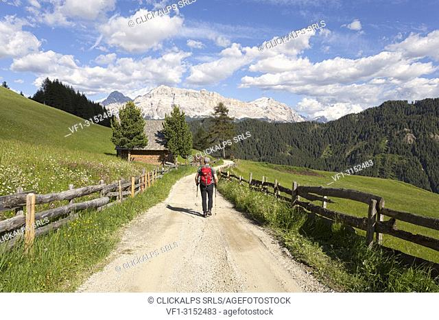 Longiarù, San Martino in Badia, Badia Valley, Dolomites, Bolzano province, South Tyrol, Italy. A hiker in a footpath with Sasso della Croce in the background