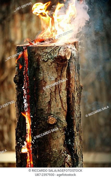 Fire Smouldering in a Tree Trunk