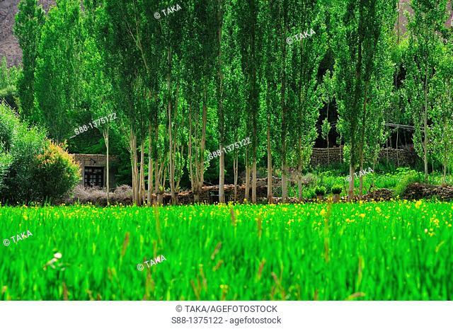 Green field at Phyan village