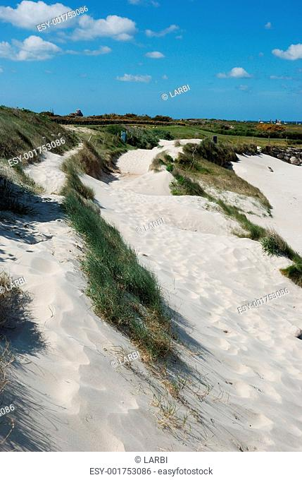 Dune with flowers and marram grass