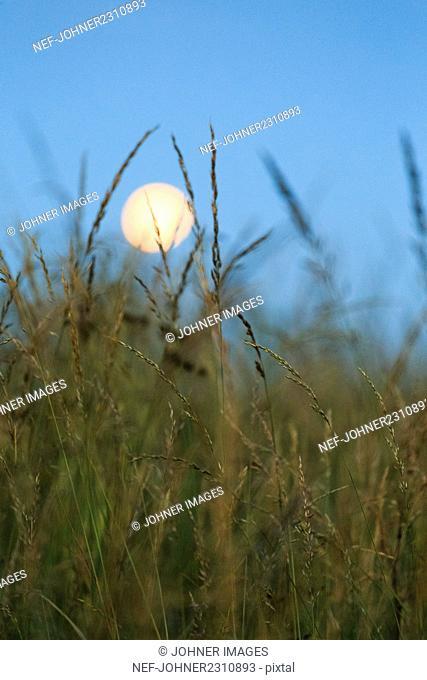 Full moon above grass