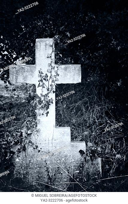 Cross Headstone Wrapped in Ivy