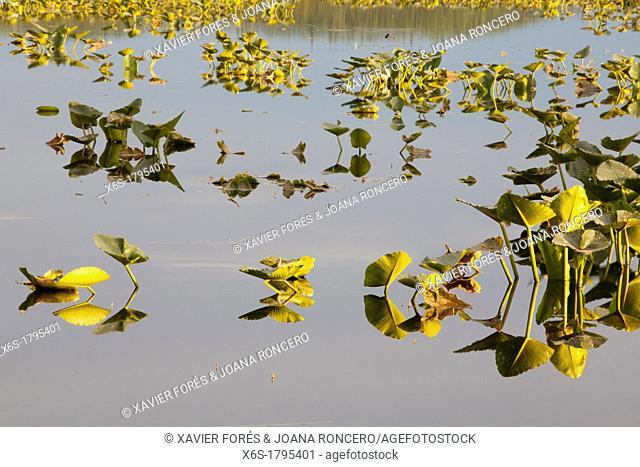 Watson Lake, Skilak Wildlife Recreation Area, Kenai Peninsula, Alaska, U S A