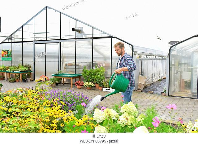 Gardener watering flowers in front of greenhouse