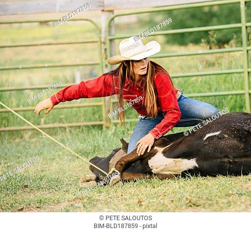Caucasian cowgirl tying cattle on ranch