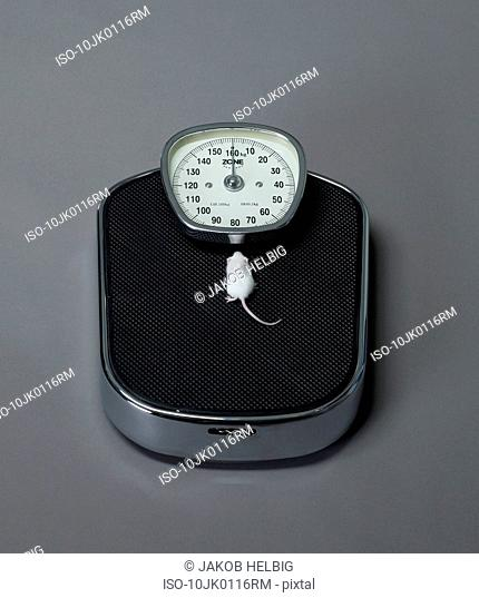 Mouse sitting on scales