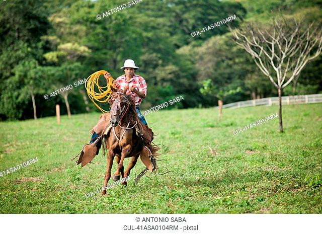 Man with lasso riding horse in field