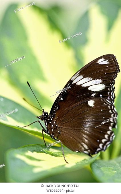 A close up view of a beautiful butterfly