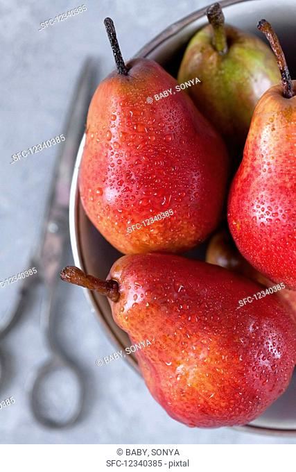 Red pears with water drops in a metal bowl