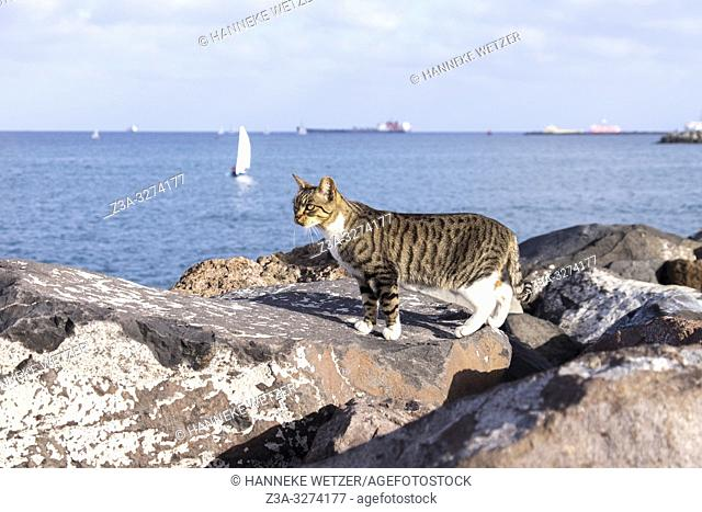Stray cat at the coastline of Las Palmas de Gran Canaria, Canary Islands