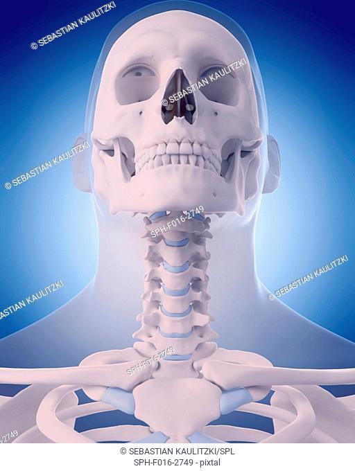 Neck bones