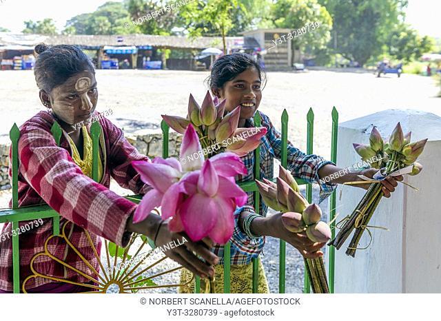 Myanmar (formerly Burma). Kayin State (Karen State). Hpa An. Saleswomen lotus flowers