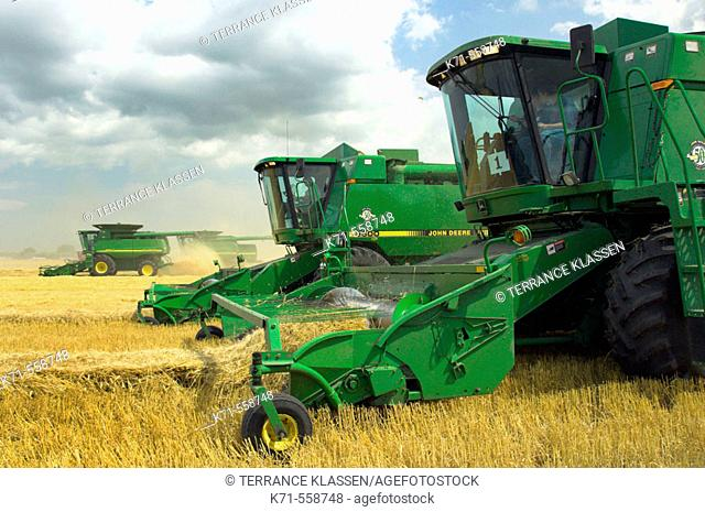 John Deere combines harvesting wheat on a field near Winkler in southern Manitoba Canada