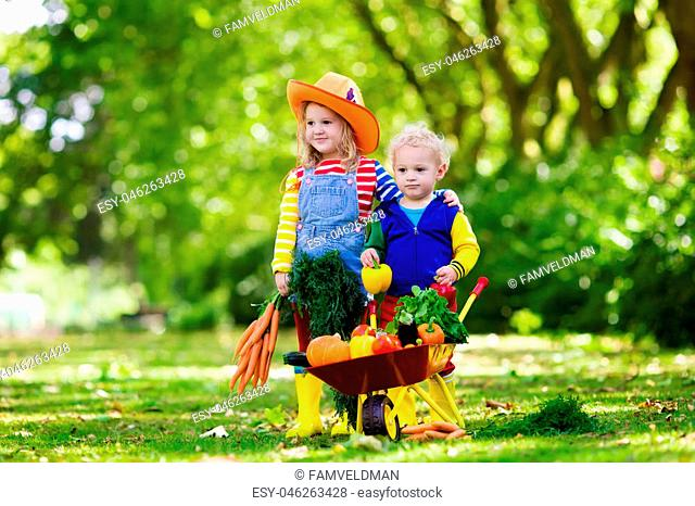 Two children picking fresh vegetables on organic bio farm. Kids gardening and farming. Autumn harvest fun for family. Toddler kid and preschooler play outdoors