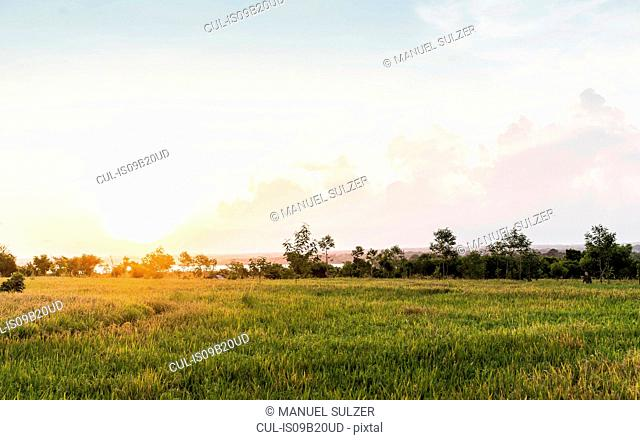 Field landscape at sunset, Lombok, Indonesia