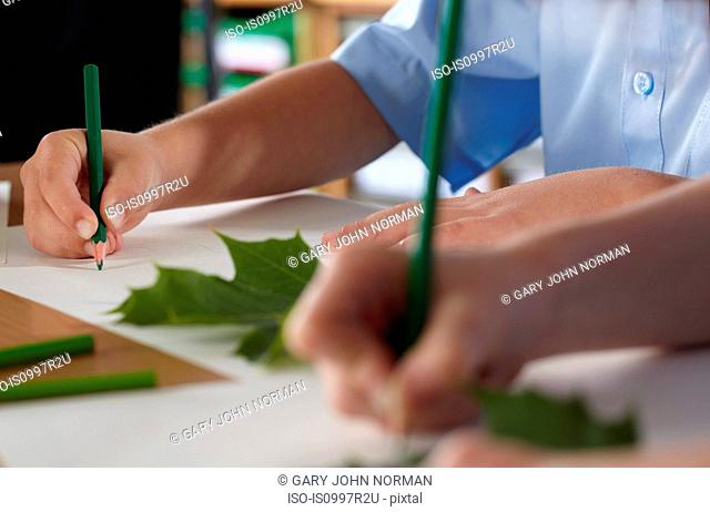 School children drawing leaves in a classroom