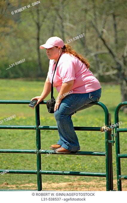 Very large woman on fence at dude ranch in the country watching cattle roundup by cowboys