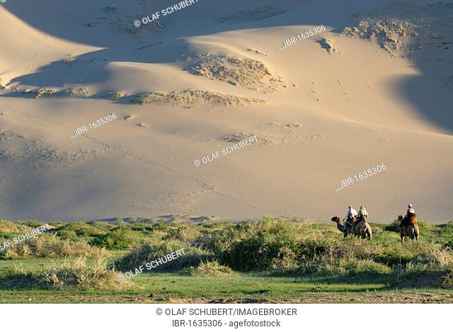 Tourists on camel riding through a lush green grass landscape towards the great Khorgoryn Els sand dunes in the Gobi Desert, Gurvan Saikhan National Park