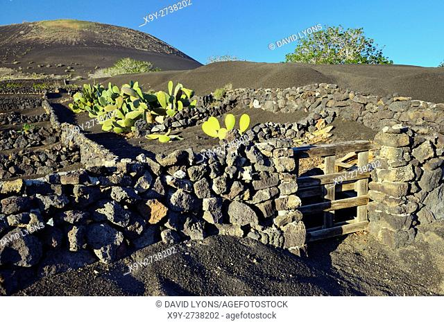 Lanzarote, Canary Islands. Traditional cinder rock walls protect cactus garden in volcanic soil landscape around La Geria