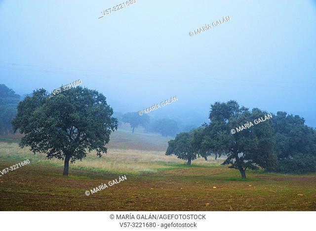 Meadow in the mist. Alcudia valley, Ciudad Real province, Castilla La Mancha, Spain