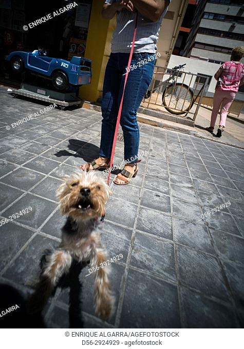 Dog barking in the street, Valencia