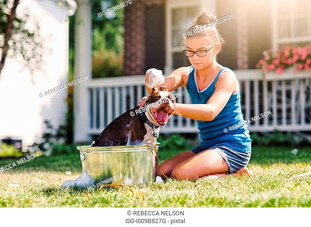 Girl washing dog in bucket