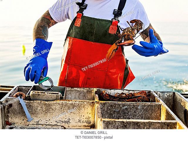 Fisherman throwing lobster