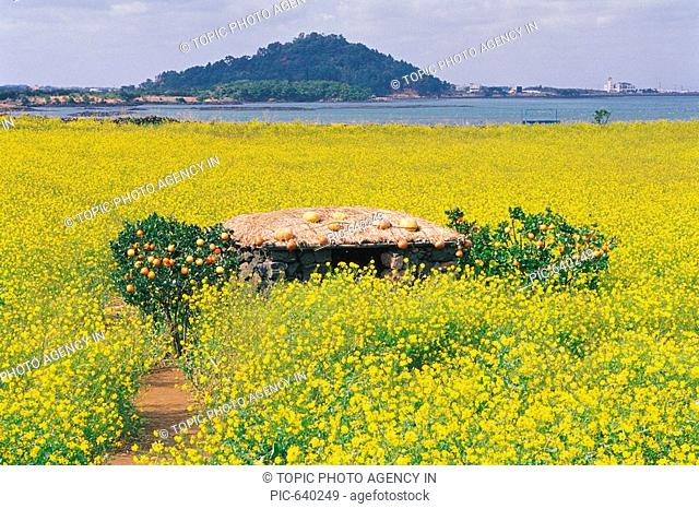 Rape Flowers Field,Traditional Korean-style Houes,¼º»ê,Jeju Island