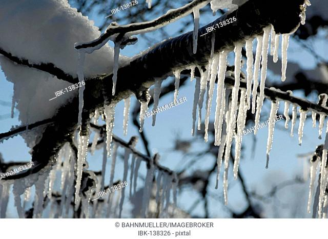 Icicles on trees and twigs