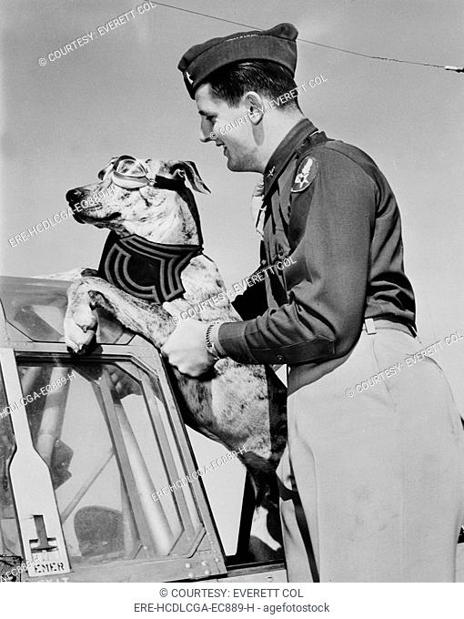 World War II, Tiger, a six-month old, 125 pound great dane earned his Sergeant's stripes by rousing a whole barracks of men at the Enid