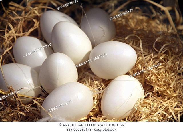 Easter eggs on a nest Liege Belgium